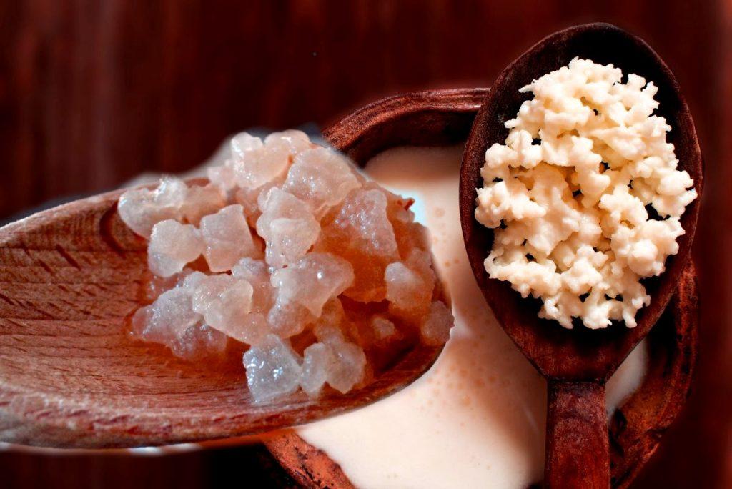 nodulos de kefir de agua